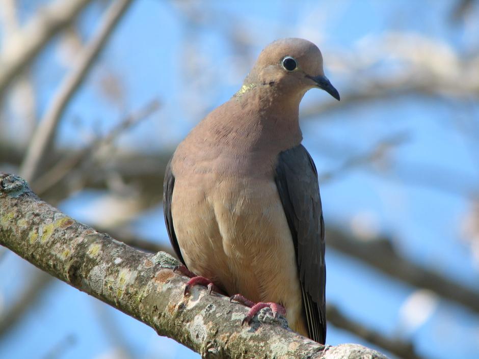 Dove Cdfw Wildlife Investigations Lab Blog