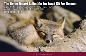 The Living Desert Zoo publishes an online magazine, FoxPaws. In article 7, issue 2 the zoo writes about an injured desert kit fox that WIL brought into their care last winter.