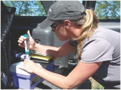 Dr. Connie Silbernagel tests the quality of a water sample. Connie earned her Master's degree at UC Davis conducting the western pond turtle health assessment with CDFW and USFWS.