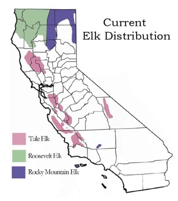 Elk distribution in California.