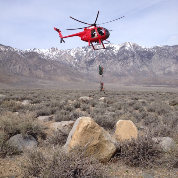 Helicopter bringing deer into basecamp for health monitoring