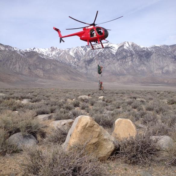 Helicopter bringing deer into basecamp for health monitoring