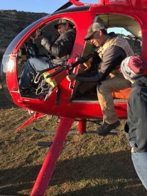 February 2018: Processed helicopter-captured deer in Southern CA as part of population and health surveillance efforts