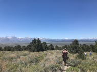June 2018: Assisted with black bear capture operations in Inyo National Forest near Bishop, CA as part of population and health surveillance efforts