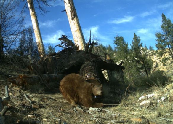 bearTrailCam.JPG